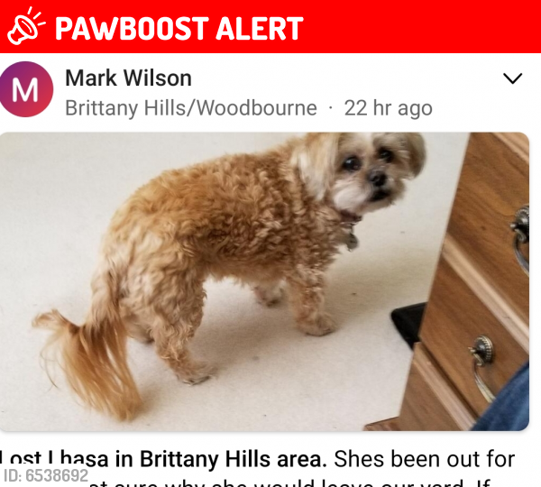 Lost Female Dog last seen Brittany hills & Rahn, Woodbourne-Hyde Park, OH 45459