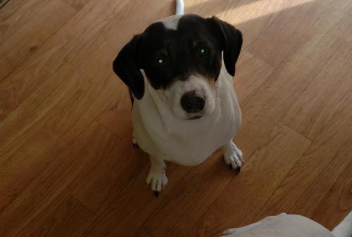 Lost Female Dog last seen Near channing ave portsmouth va , Portsmouth, VA 23702