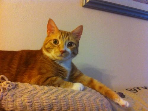 Lost Male Cat last seen Virginia Beach Blvd , Norfolk, VA 23504