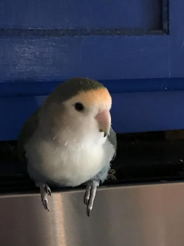 Lost Unknown Bird last seen Culmer Dr / Wellsford Dr, Virginia Beach, VA 23454