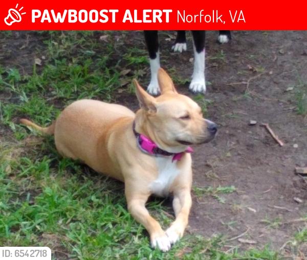 Lost Female Dog last seen Ludlow Street and Lindenwood avenue, Norfolk, VA 23504