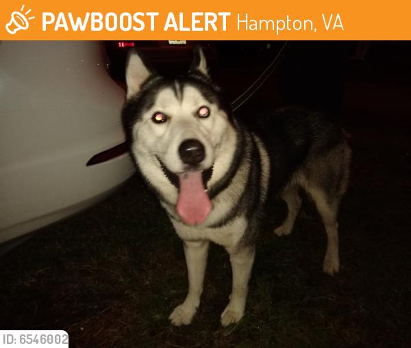 Surrendered Male Dog last seen Rip Rap Rd, Hampton, VA 23669