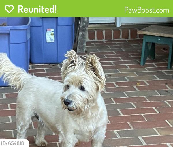 Reunited Male Dog last seen Near Viewmont Elementary School , Hickory, NC 28601