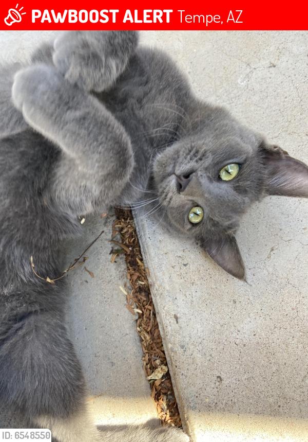 Lost Female Cat last seen E La Jolla dr and college , Tempe, AZ 85282