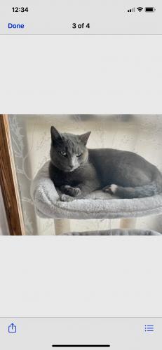 Lost Male Cat last seen Kingfisher lane, the retreat of Beckett ridge subdivision , Beckett Ridge, OH 45069