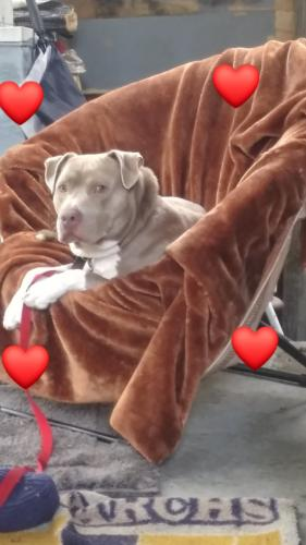 Lost Male Dog last seen Killiam, Norfolk, VA 23508