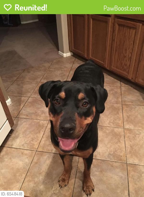 Reunited Female Dog last seen 158th and Van Buren, Goodyear, AZ 85338