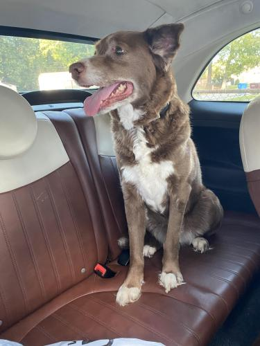 Found/Stray Female Dog last seen Loxley Gardens, Chesapeake, VA 23323