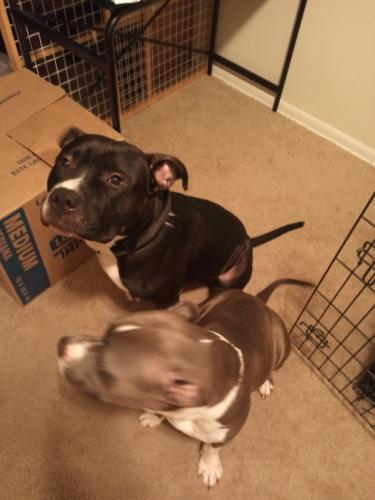 Lost Male Dog last seen Hodges Manor neighborhood (700 Lancer Drive, Mallard Cove Townhomes aka Yorkshire), Portsmouth, VA 23701