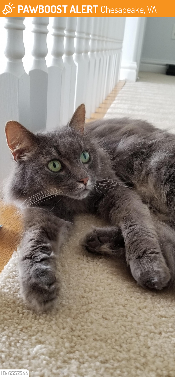 Found/Stray Female Cat last seen Leslie's Pool Supplies on Battlefield Blvd, Chesapeake, VA 23322