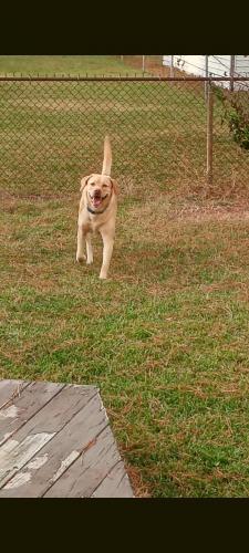 Found/Stray Male Dog last seen Near old ocean view rd, Norfolk, VA 23518