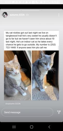 Lost Male Cat last seen Sparrow road goladcreat, Chesapeake, VA 23325