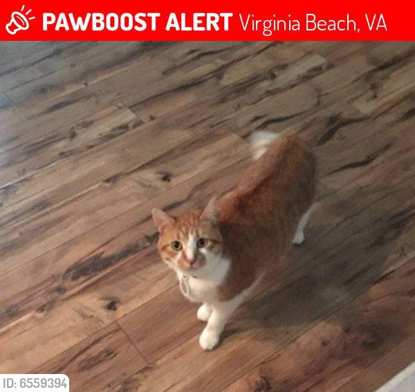 Lost Male Cat last seen Nichols Ridge Road and Willow Croft Road, Virginia Beach, VA 23462