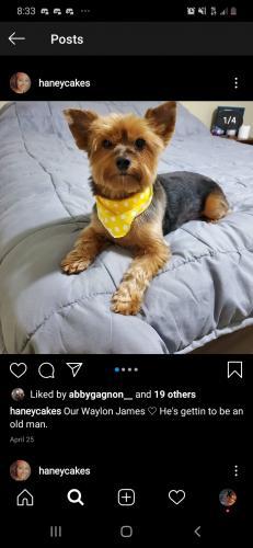 Lost Male Dog last seen Poquoson Va, Poquoson, VA 23662