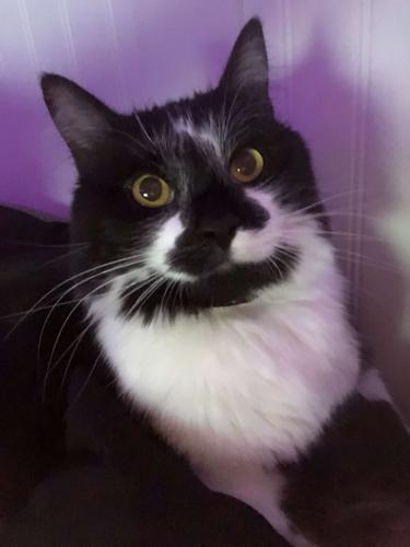 Lost Male Cat last seen Near ODU Campus, Norfolk, VA 23508