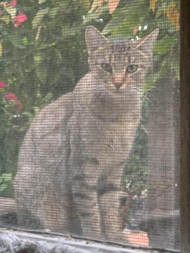Found/Stray Unknown Cat last seen Amoroso Pl & Penmar, Los Angeles, CA 90291