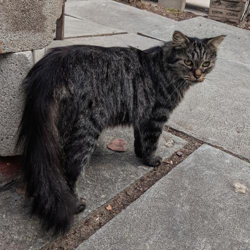 Found/Stray Unknown Cat last seen Myra and Barbara Circle, Buena Park, CA 90620