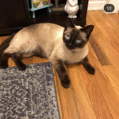 Lost Female Cat last seen Inglewood Ave and W. 190th Redondo Beach , Redondo Beach, CA 90278