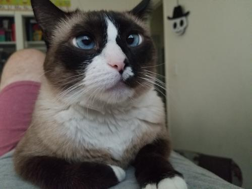 Lost Female Cat last seen Buena Vista and Three Ranch Rd., Duarte, CA 91010