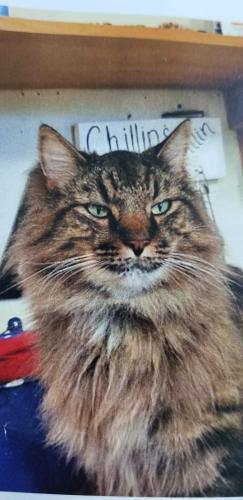 Lost Male Cat last seen Victory Blvd, Yorktown, VA 23693