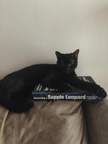 Lost Male Cat last seen Last seen at the corner of East Worcester Dr and Old Canterbury Dr, Virginia Beach, VA 23455