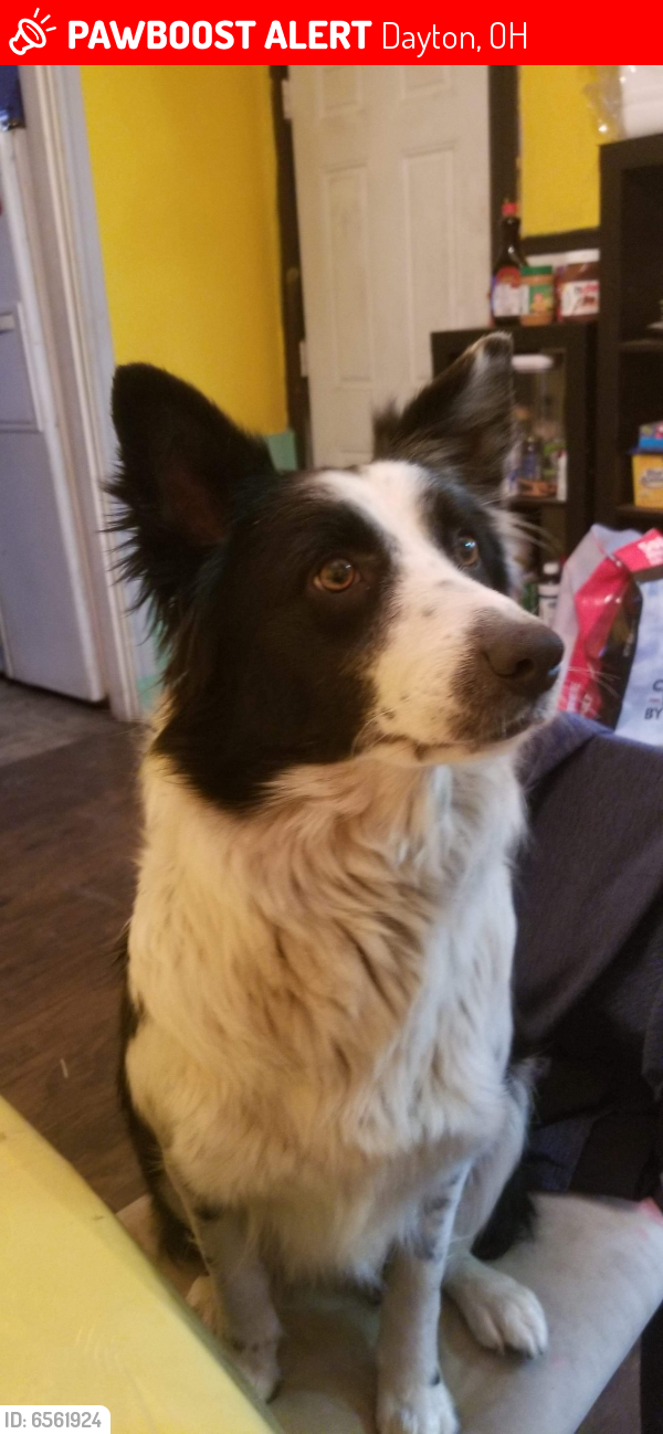Lost Female Dog last seen Riverside & Redwood Ave, Dayton, OH 45405