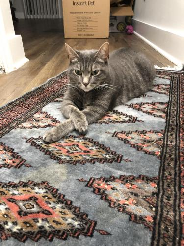 Lost Female Cat last seen Linkhorn bay apartment , Virginia Beach, VA 23451