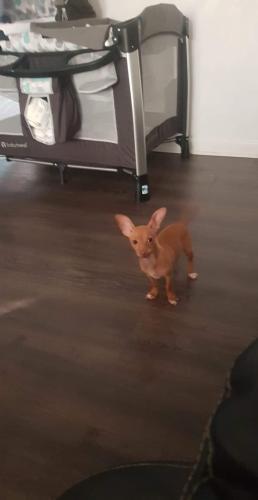 Lost Female Dog last seen Oakcrest rd. , Portsmouth, VA 23702