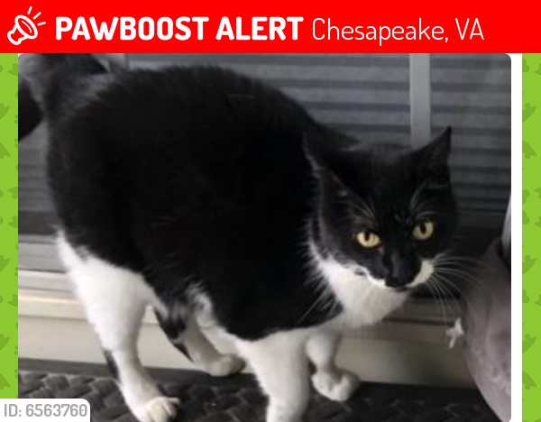 Lost Female Cat last seen Taylor Rd and Pughsville Rd, Chesapeake, VA 23321