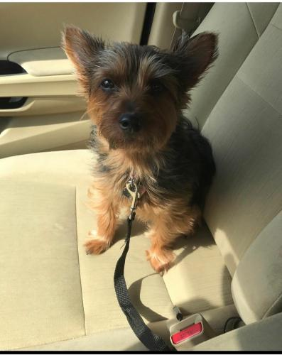Lost Female Dog last seen Forrest Dr., Newport News, VA 23601