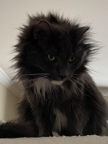Lost Male Cat last seen Near , Arlington, TX 76017