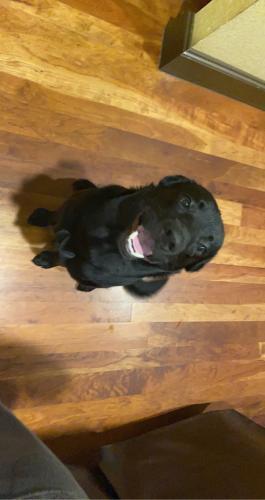 Found/Stray Male Dog last seen Quail lane and Trail lake , Arlington, TX 76016