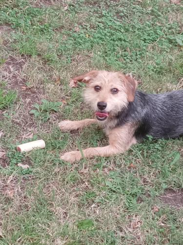 Lost Female Dog last seen Mercury, Hampton, VA 23663