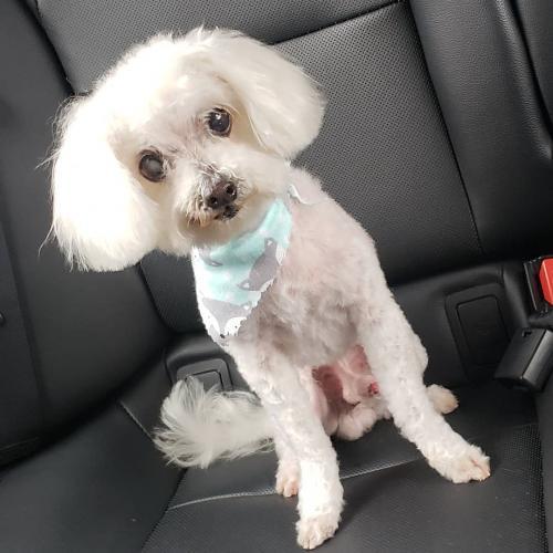 Lost Male Dog last seen CARMELITA AVE. , Huntington Park, CA 90255