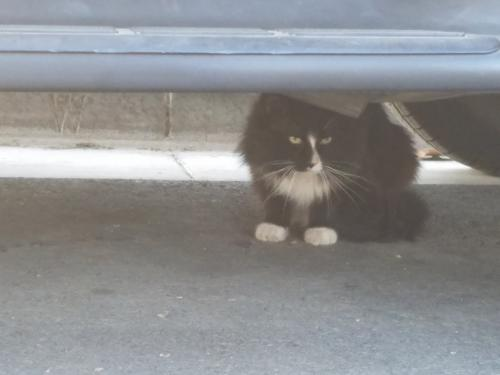 Found/Stray Unknown Cat last seen W. Brookdale Pl between Malden and Highland, Fullerton , Fullerton, CA 92832