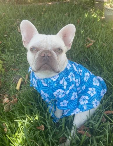 Lost Male Dog last seen 90th st and central , Los Angeles, CA 90002