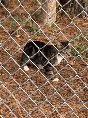 Found/Stray Male Cat last seen Pruden and robs, Suffolk, VA 23434