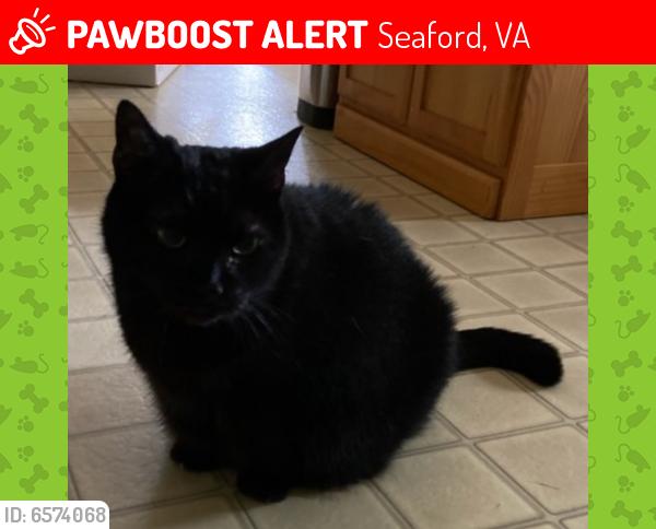 Lost Female Cat last seen Between Back Creek Road and Raymond Drive , Seaford, VA 23696