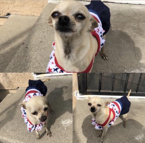 Lost Female Dog last seen Near Jordan high , Long Beach, CA 90805