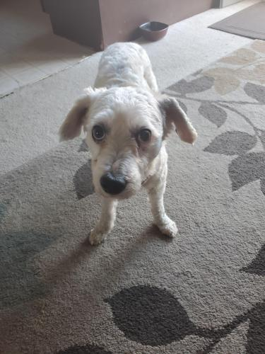Found/Stray Male Dog last seen Del Amo Boulevard and Prospect Ave, Torrance, CA 90503
