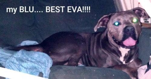 Lost Male Dog last seen Dog park on 190th, Redondo Beach, CA 90254