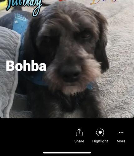 Lost Male Dog last seen Ramona Blvd/ ferris St, El Monte, CA 91732