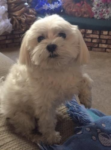 Lost Female Dog last seen Painter and Valna , Whittier, CA 90602