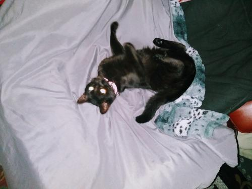 Lost Female Cat last seen Villa Huntington Mobile Home Park, Huntington Beach, CA 92647