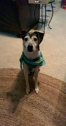 Lost Male Dog last seen Bonney rd / s Kentucky , I-264, VA 23451