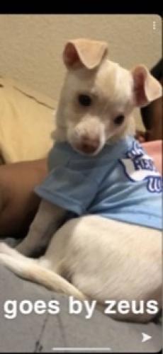 Lost Male Dog last seen Brookhurst , Garden Grove, CA 92841