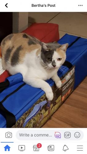 Lost Female Cat last seen Memory ln and Bristol , Santa Ana, CA 92706