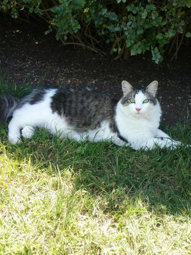 Lost Male Cat last seen Ringwood Ave and Florence Ave., Santa Fe Springs, CA 90670