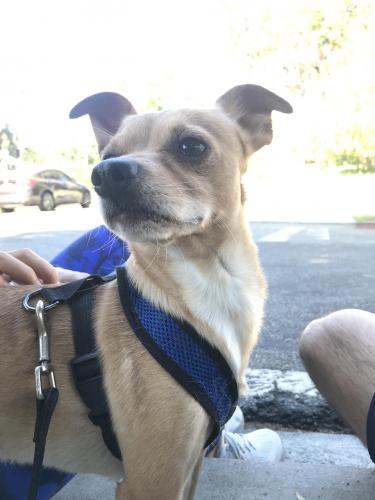 Found/Stray Male Dog last seen Vermont Ave. near Griffith Park, Los Angeles, CA 90027