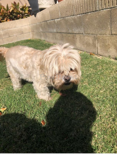 Found/Stray Male Dog last seen Koch Park, Placentia, CA 92870